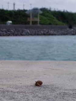 小浜島3.jpg